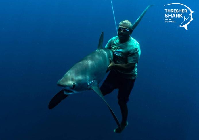 Nelayan Alor, melepaskan hiu tikus setelah tagging